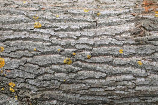Tree Bark Texture #1