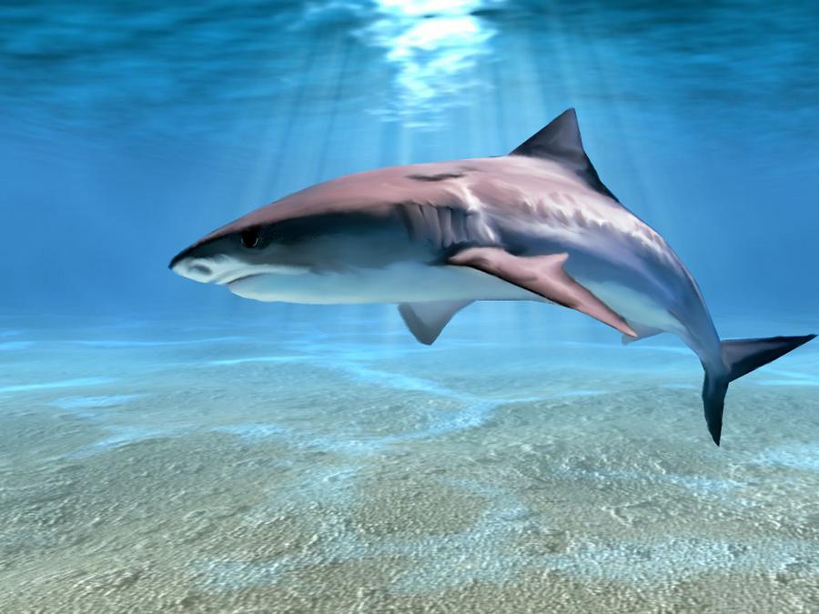 THE BEAUTIFUL SHARK by Aim4Beauty on DeviantArt