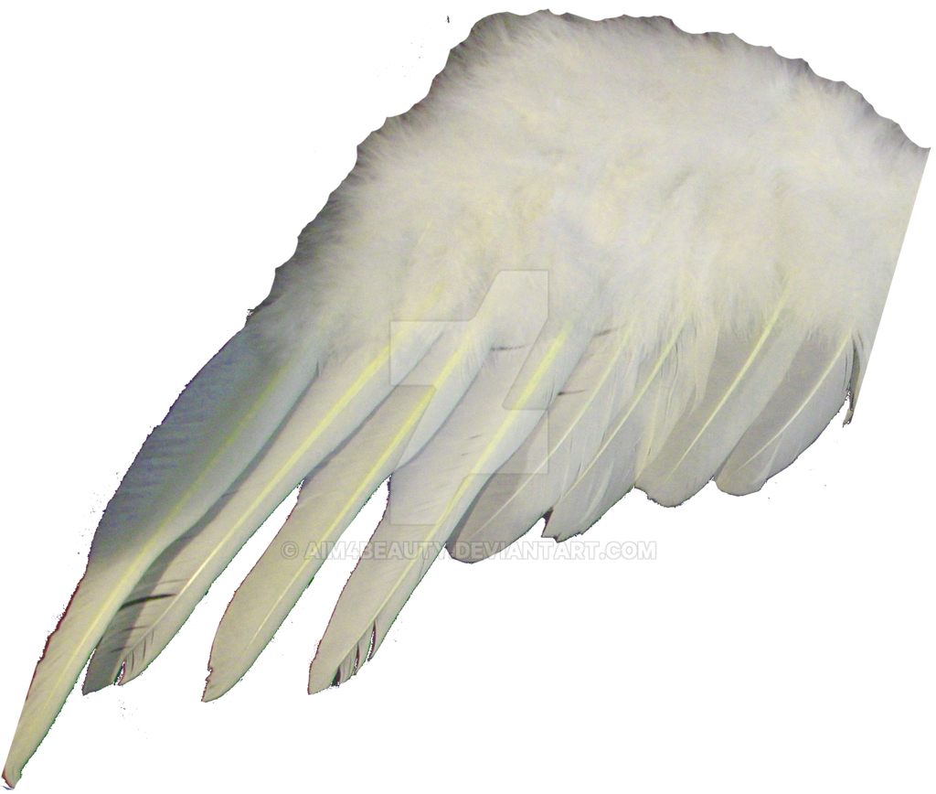 ANGEL OR BIRD WING by Aim4Beauty on DeviantArt