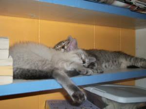 Lazing in the Bookshelf