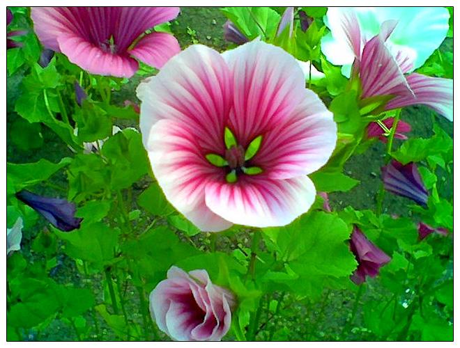 Pretty flowers by Crea...