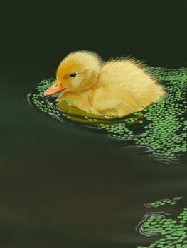 Duckling Finished