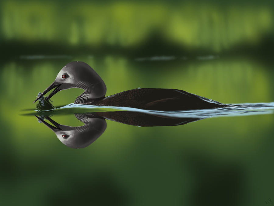 Female Black Breasted Loon by CVDart1990