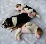 Custom Needle Felted Beagle Puppies