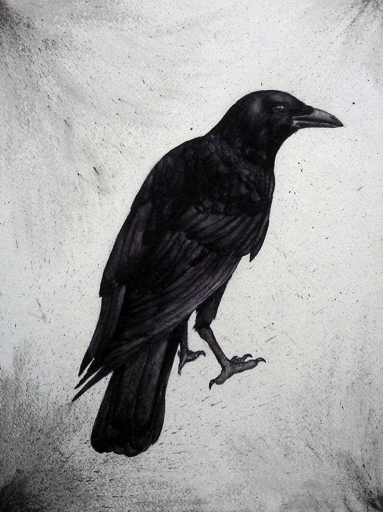 Crow by GreyCorbie