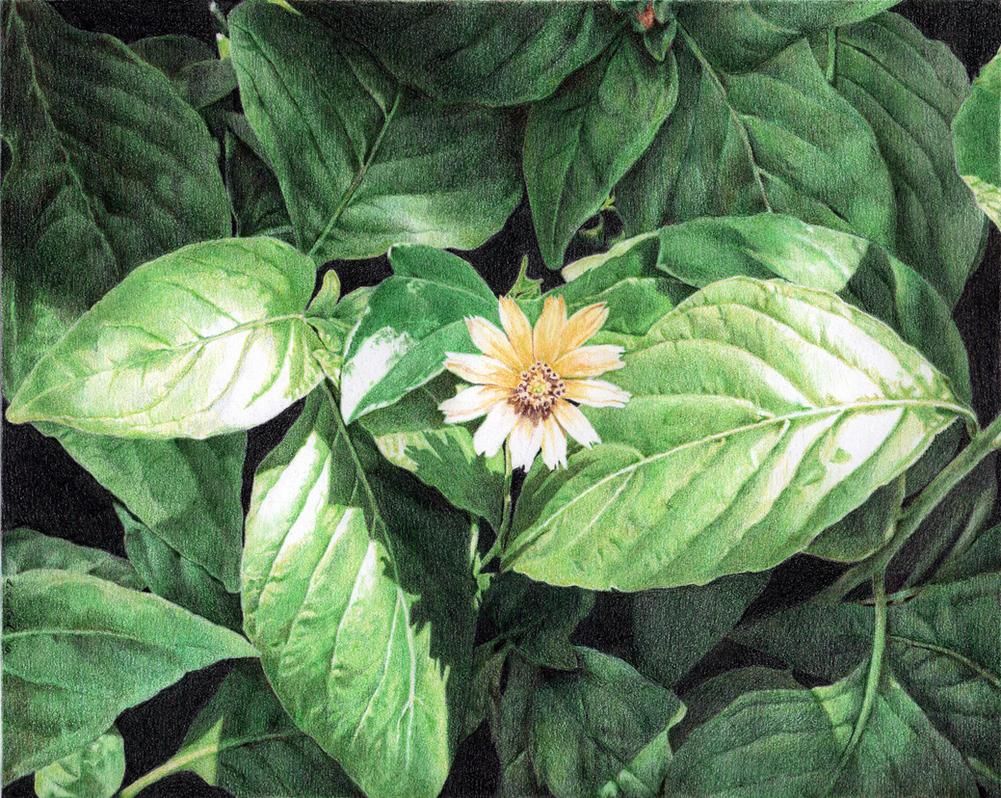 Single Bloom by GloriaDei