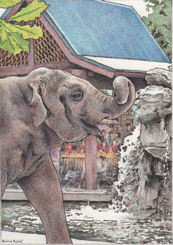 Water For Elephant