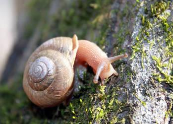 Snail by utenzi
