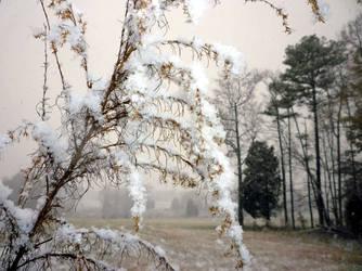 Icy Grass by utenzi