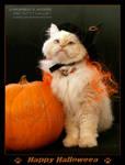 Happy Halloween Cat - MOMO 4 by Kumiko-Art