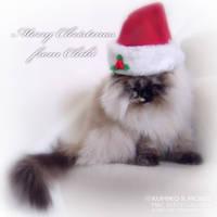 Merry Christmas 5 by Kumiko-Art