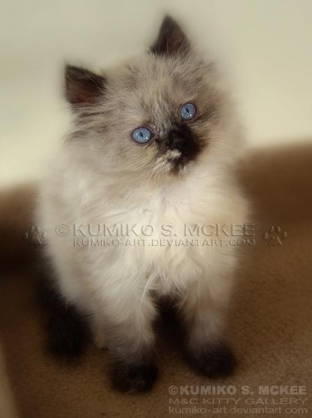 My Little Chibi by Kumiko-Art
