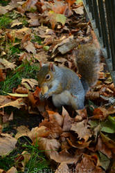 The Squirrel From London :D by Saru-Koshiro