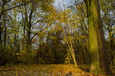 Autumn. by Saru-Koshiro