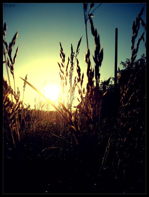 good morning sun by Crank0