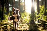 Border wolf! by sunriseaave