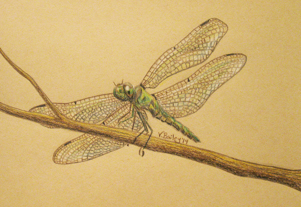 Dragonfly by CharcoalAngel
