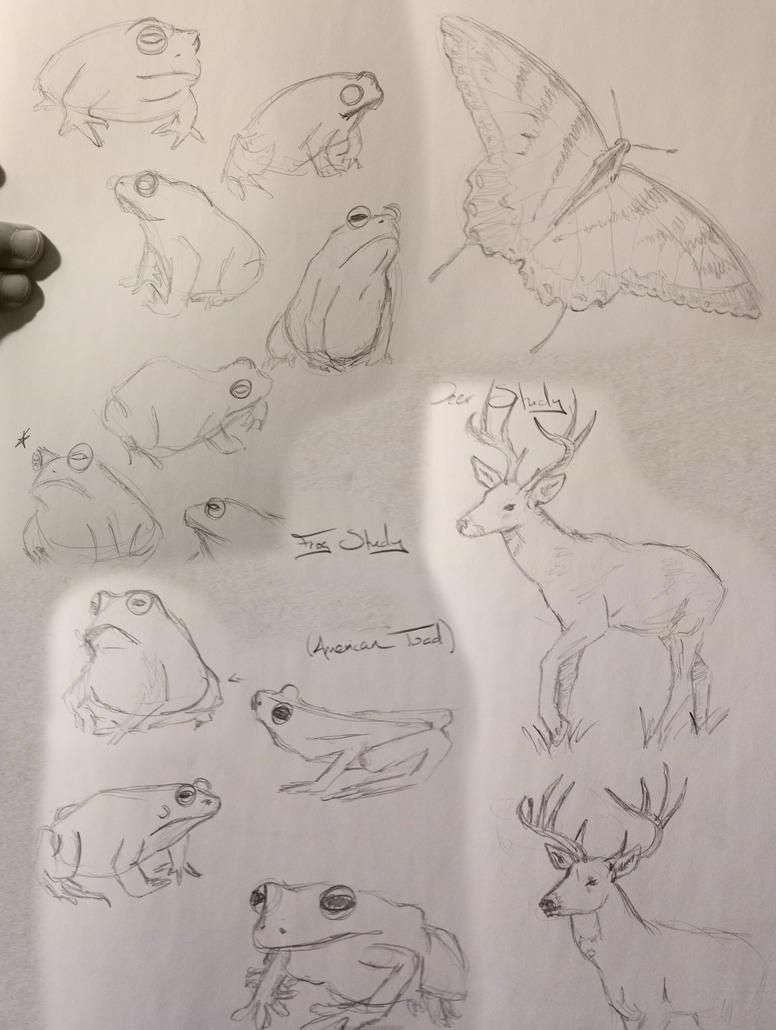 Frog Sketchdump by Umberink