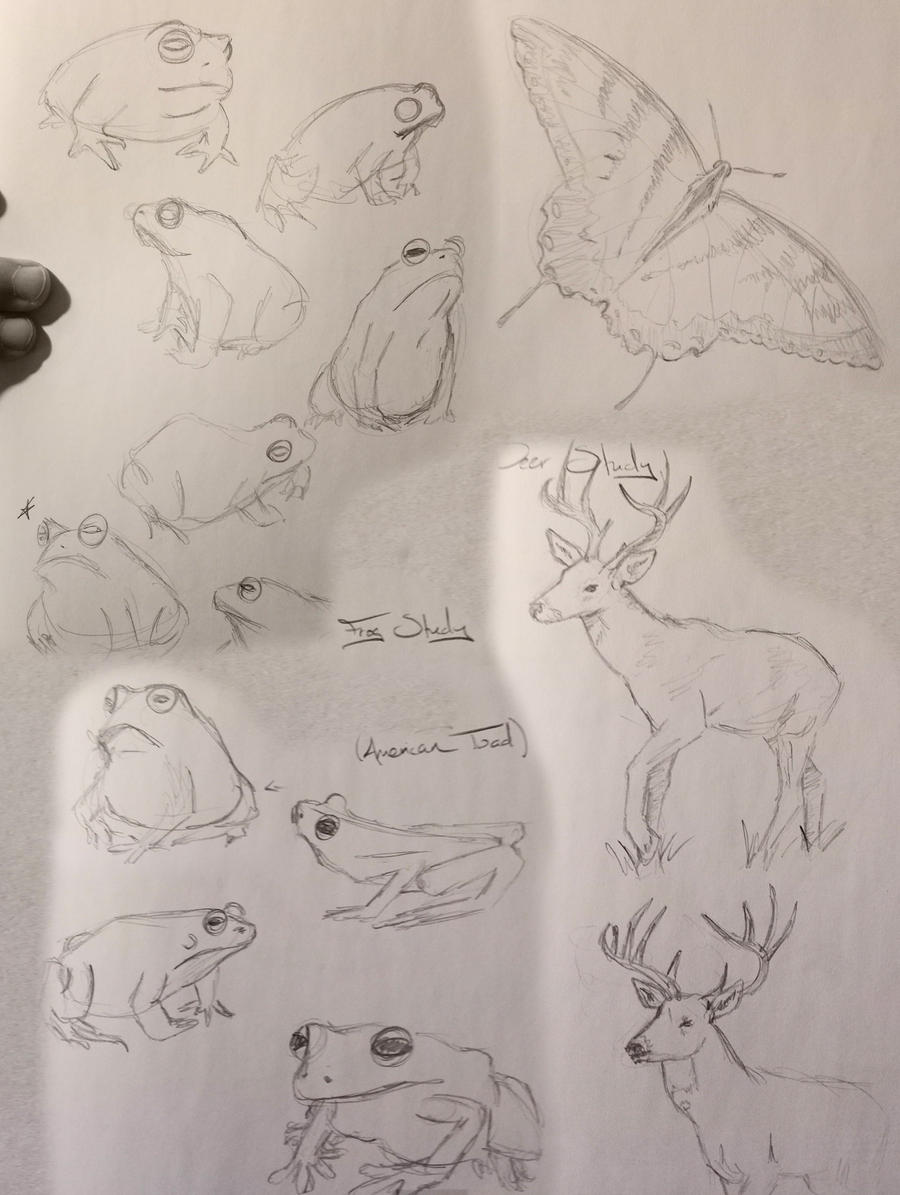 Frog Sketchdump by Umberink