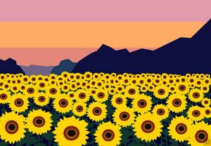 Girassol/Sunflower