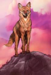Coyote by stvnhthr