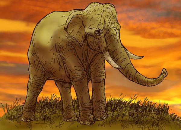 Asian Elephant by stvnhthr on DeviantArt