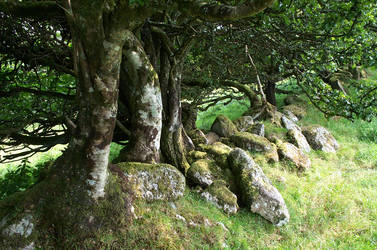 Trees on Dartmoor by greensap