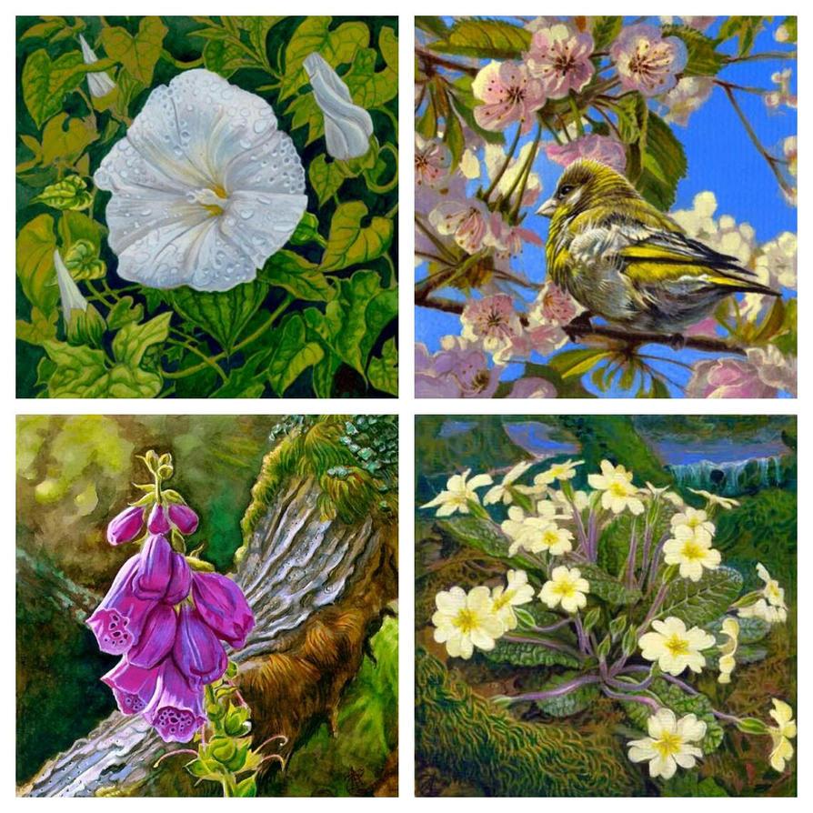 Devon wild flowers by greensap