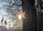 Sunshine grey