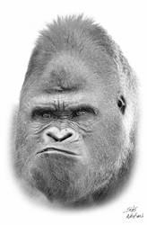 Western Lowland Gorilla by SosiNonoo