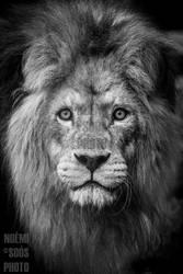 King Elek by SosiNonoo