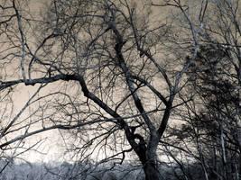 Gloomy Tree by NightmareShayde