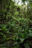 rainforest by CO2PHOTO-stock