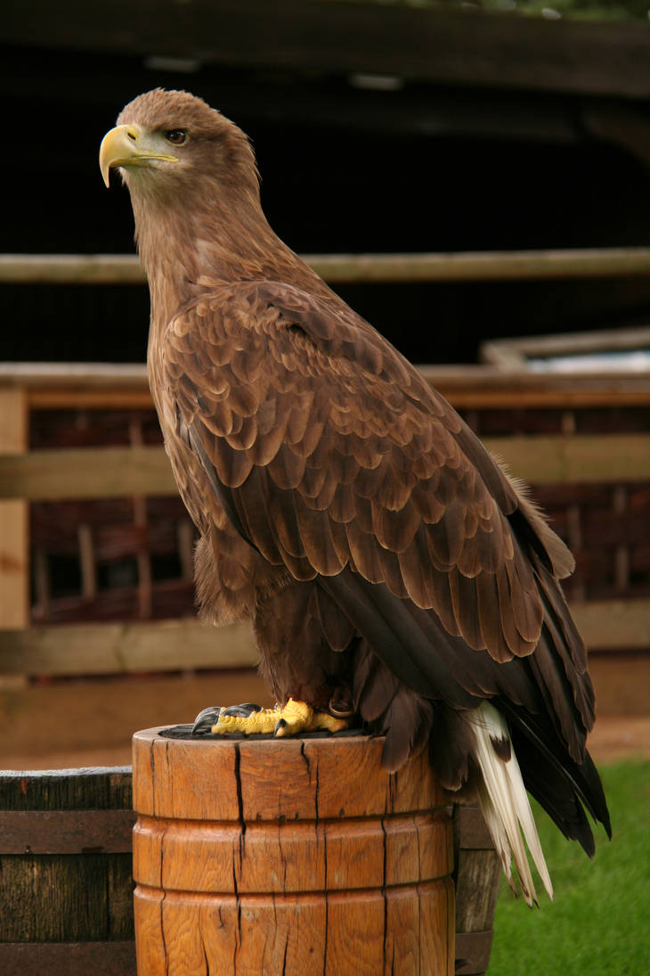 Eagle2 - stock by CO2PHOTO-stock