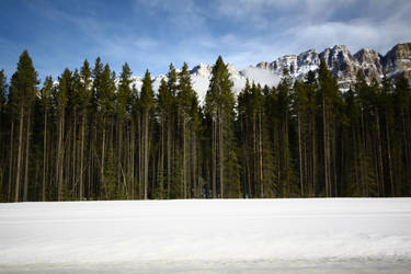 trees - stock by CO2PHOTO-stock