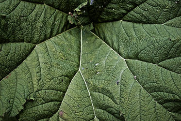 leaf - stock by CO2PHOTO-stock