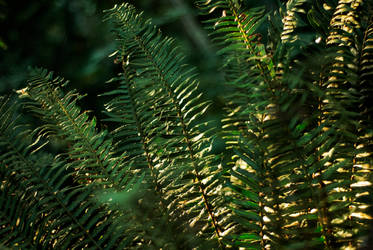 ferns - stock by CO2PHOTO-stock