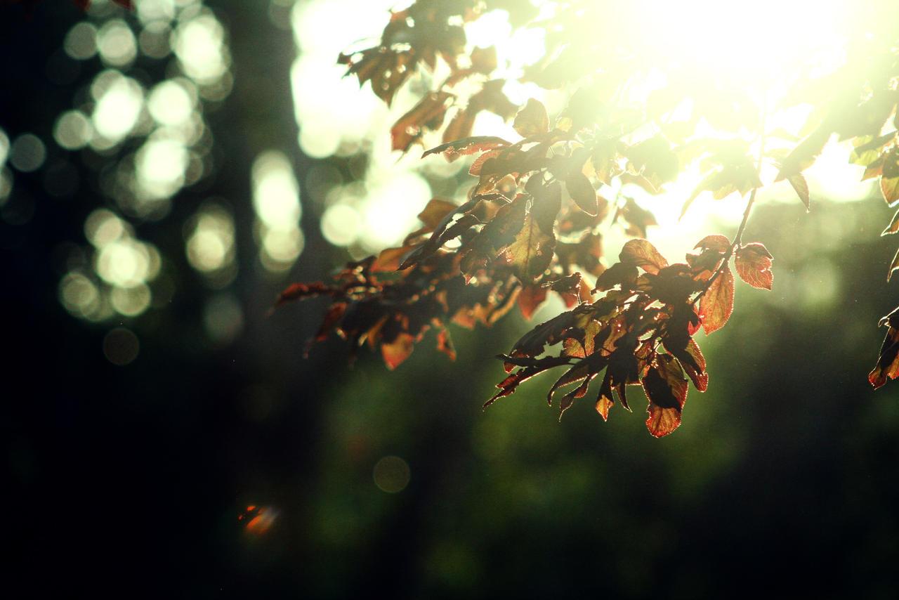 leaves - stock