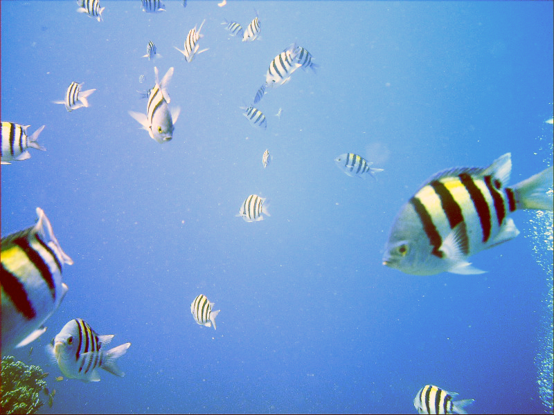 So many fish in the sea by cloudhunter on deviantart for Your inner fish summary