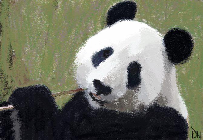 panda by GrafixGirlIreland