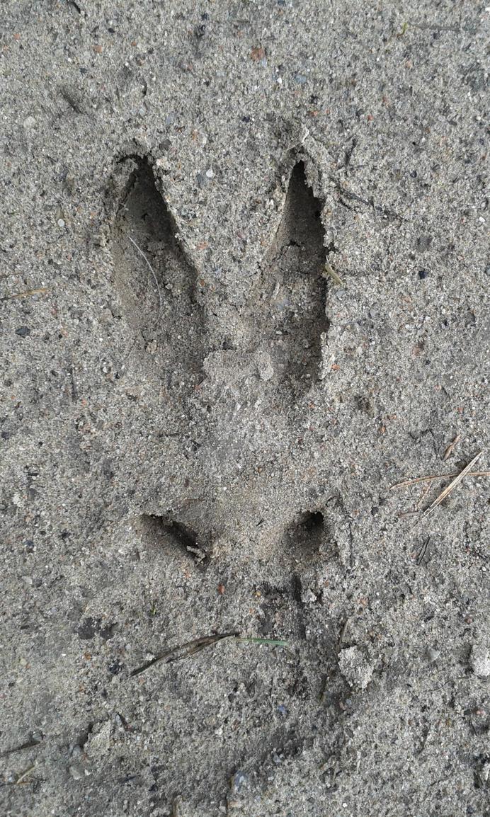 Footprint by Daramoon