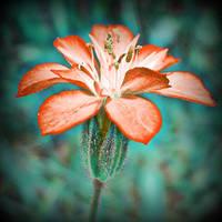delicate soul by olympiadakasatou