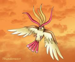 Pidgeot... by Thunderwest