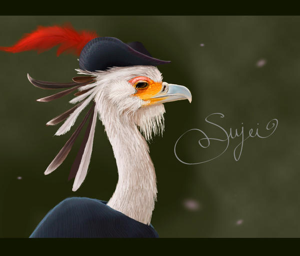 Secretary bird by Thunderwest