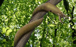 Viper Slug