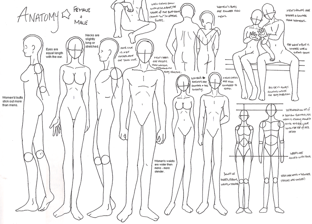 Anatomy by zoro4me3 on DeviantArt