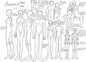 Anatomy by zoro4me3