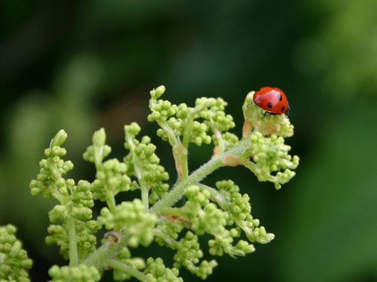Ladybird by smoochyscoop