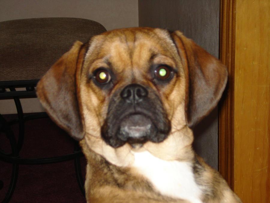 Whole Dog Journal Pet Insurance Reviews