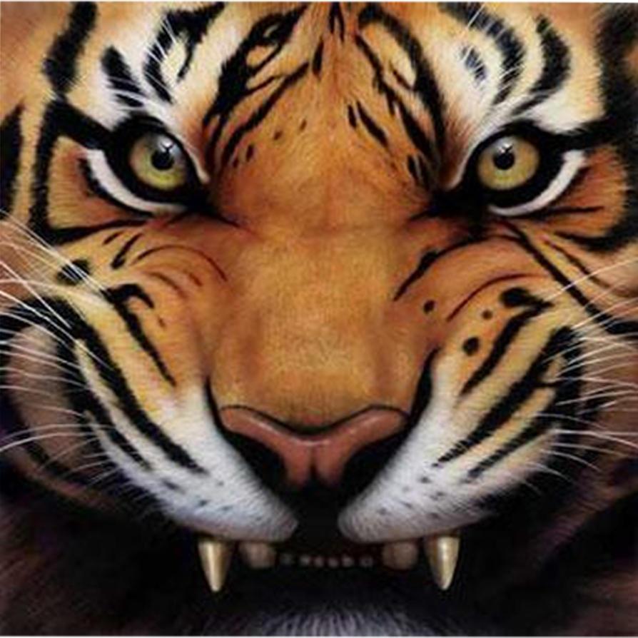 DREAM WALLPAPER: Eye Of The Tiger